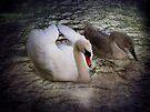 Swan Lake by Carol Bleasdale