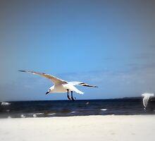 Seagull by Margaret Walker