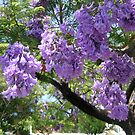 Jacaranda Tree by simonescott