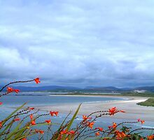 Donegal by Barbara Craig