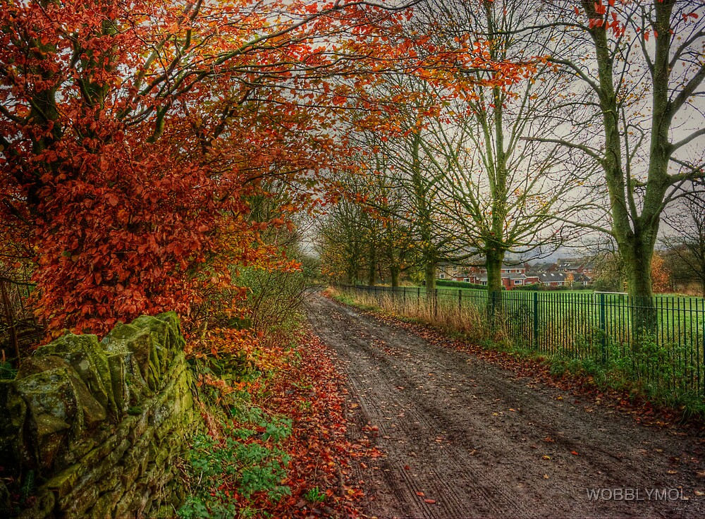 A Country Lane In Autumn Colours by WOBBLYMOL
