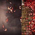 Red leaves and water by pahas