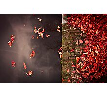 Red leaves and water Photographic Print