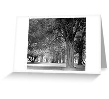 Avenue of Trees in the Phoenix Park, Dublin Greeting Card