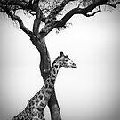 giraffe and a tree by javarman