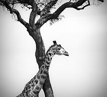 Africa Black & White by javarman