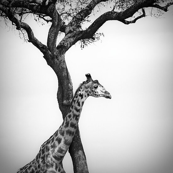 giraffe and a tree by javarman