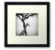 giraffe and a tree Framed Print