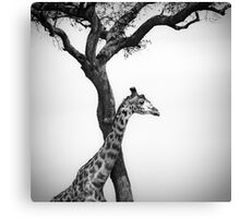 giraffe and a tree Canvas Print