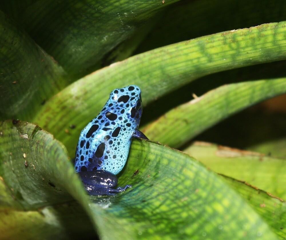 Blue Beauty by Mounty