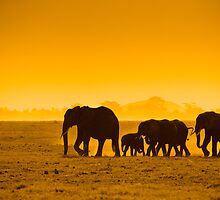 Silhouettes of elephants by javarman