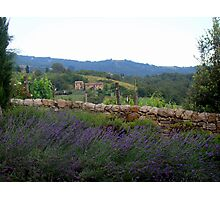 Lavendar Walk Photographic Print