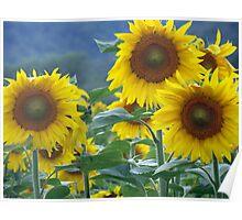 Summer Suns Poster