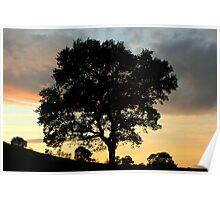 tree silhoette Poster