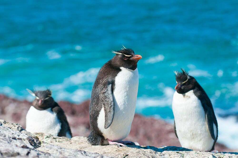 rockhopper penguins by javarman