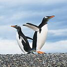 gentoo penguins by javarman