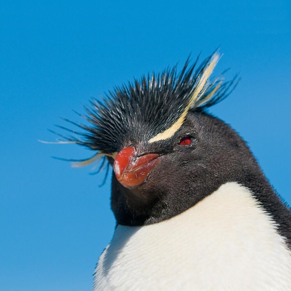 rockhopper penguin by javarman