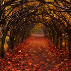 Christchurch Tunnel Of Leaves by delros