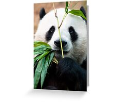 Panda eating bamboo Greeting Card