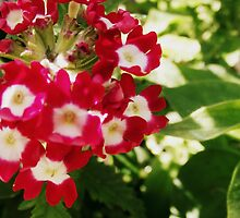 Little Flowers. by Beth Mackelden