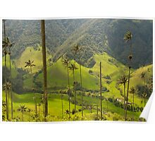 Wax palm trees of Cocora Valley, Colombia Poster