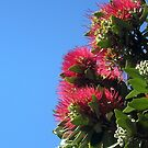 Pohutukawa Tree & Sky by jezkemp