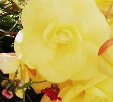 Yellow Flower. by Beth Mackelden
