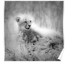 Cheetah's cub Poster