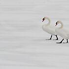 Swans on Frozen, Snowed Over Water by Gerda Grice