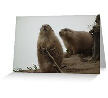 Prairie Dogs on watch Greeting Card