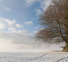Sentry Tree by Gary Finnigan
