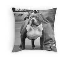 American Staffordshire Terrier Throw Pillow