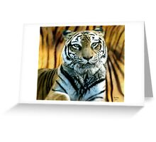 Portrait of a beautiful Tiger Greeting Card