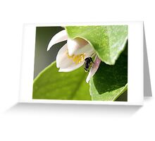 Native Bee -  Australia Greeting Card