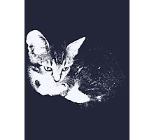 Furry Kitten - One Color Vector Photographic Print
