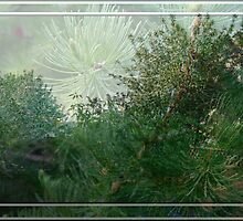 Tree Blends by Sandra Foster