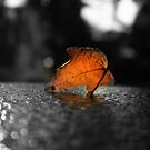 Single Dead Leaf by RockyWalley