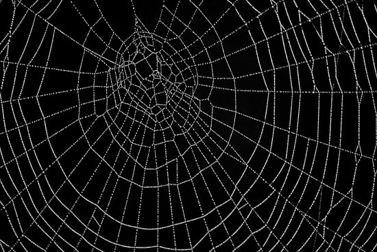 The Art of the Spider by relayer51