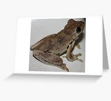 Little Brown Frog Greeting Card