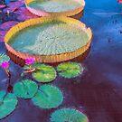 Water Lily Pattern by John Rivera