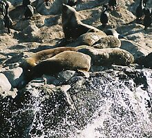 Ushuaia wildlife and sea animals by bethischeery