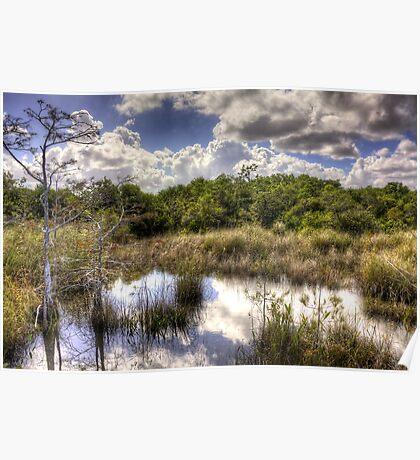 Hammock — Florida Everglades Poster