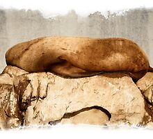 Snoozing on the Belle Chain Islets by toby snelgrove  IPA