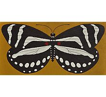 Passion  ( zebra longwing butterfly ) Photographic Print
