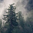 Fog Sun Trees by TerrillWelch