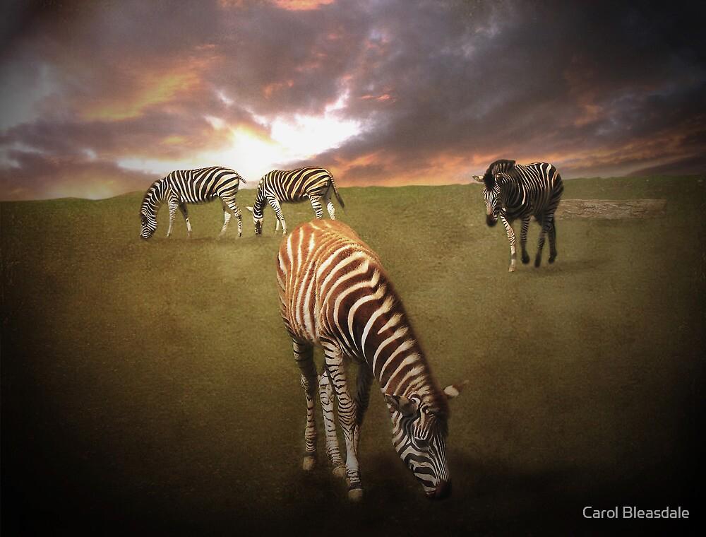 Serengeti by Carol Bleasdale
