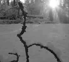 Branch by cudatron