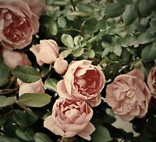 Roses in a flower shop, outskirts of Calgary, Alberta, Canada by bethischeery