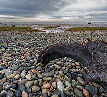 Pebbles by inkedsandra