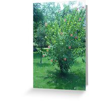 Beautiful red tree blossoms Greeting Card